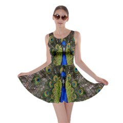 Bird Peacock Display Full Elegant Plumage Skater Dress