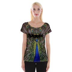 Bird Peacock Display Full Elegant Plumage Women s Cap Sleeve Top