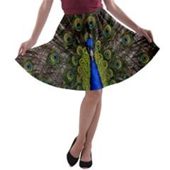 Bird Peacock Display Full Elegant Plumage A Line Skater Skirt