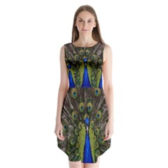 Bird Peacock Display Full Elegant Plumage Sleeveless Chiffon Dress