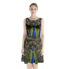 Bird Peacock Display Full Elegant Plumage Sleeveless Chiffon Waist Tie Dress