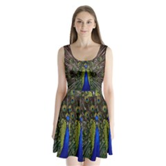 Bird Peacock Display Full Elegant Plumage Split Back Mini Dress