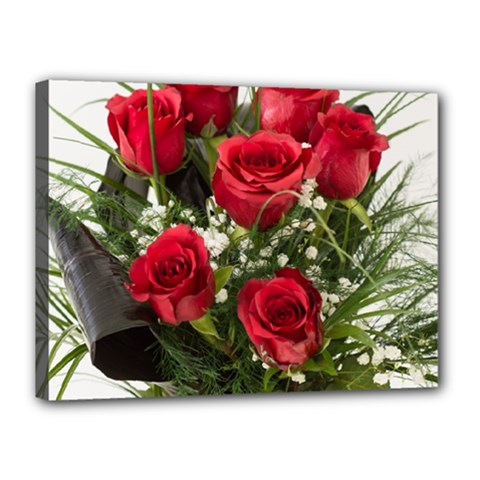 Red Roses Roses Red Flower Love Canvas 16  X 12