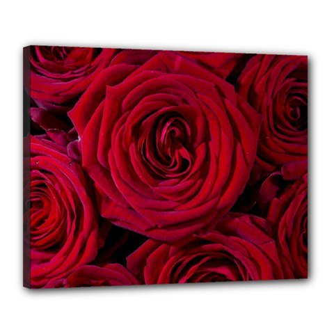 Roses Flowers Red Forest Bloom Canvas 20  x 16