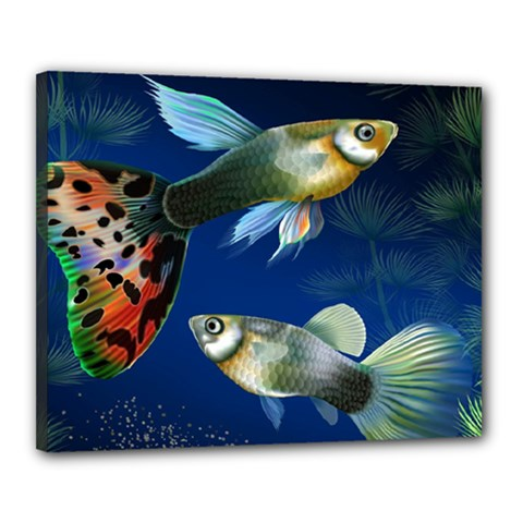 Marine Fishes Canvas 20  X 16