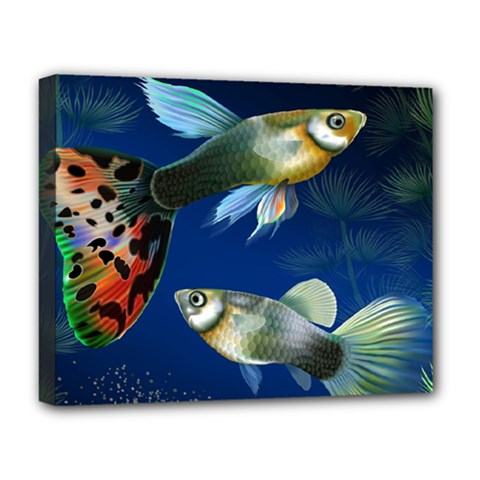 Marine Fishes Deluxe Canvas 20  X 16