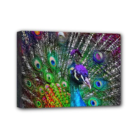 3d Peacock Pattern Mini Canvas 7  X 5