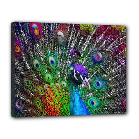 3d Peacock Pattern Canvas 14  X 11