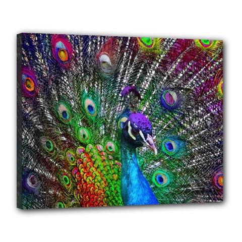 3d Peacock Pattern Canvas 20  x 16