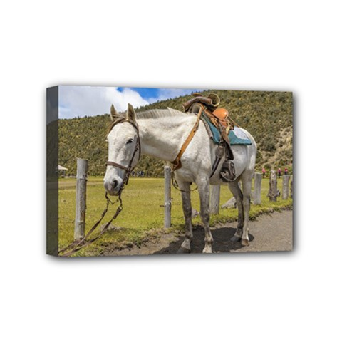 White Horse Tied Up at Cotopaxi National Park Ecuador Mini Canvas 6  x 4