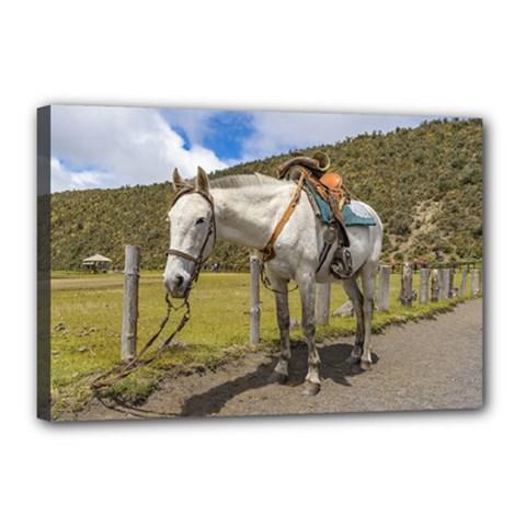 White Horse Tied Up at Cotopaxi National Park Ecuador Canvas 18  x 12