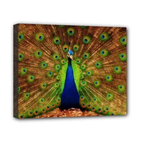 3d Peacock Bird Canvas 10  X 8