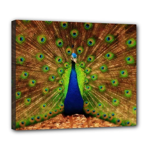3d Peacock Bird Deluxe Canvas 24  X 20