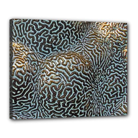Coral Pattern Canvas 20  x 16