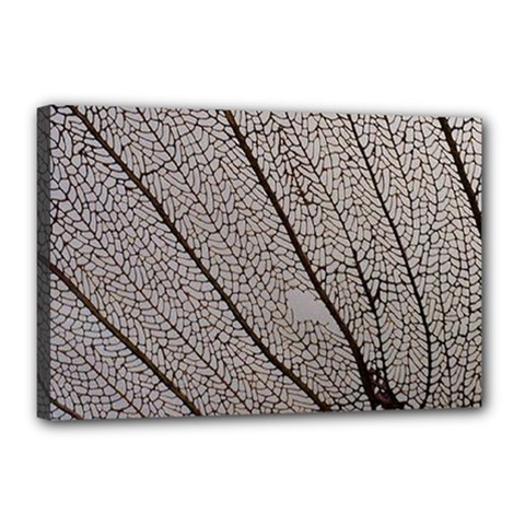 Sea Fan Coral Intricate Patterns Canvas 18  x 12