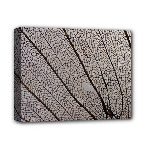Sea Fan Coral Intricate Patterns Deluxe Canvas 14  X 11