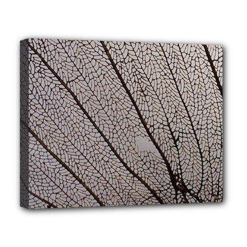 Sea Fan Coral Intricate Patterns Deluxe Canvas 20  X 16