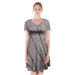Sea Fan Coral Intricate Patterns Short Sleeve V-neck Flare Dress