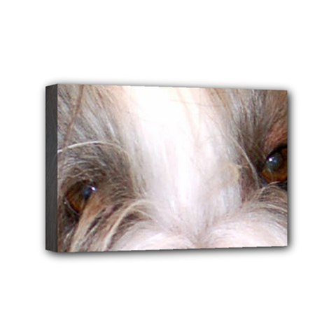 Bearded Collie Eyes Mini Canvas 6  x 4