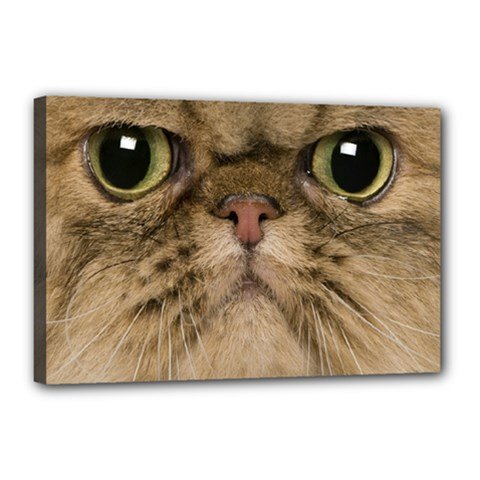 Cute Persian Cat face In Closeup Canvas 18  x 12