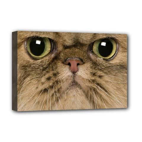 Cute Persian Cat Face In Closeup Deluxe Canvas 18  X 12
