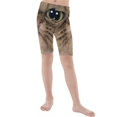 Cute Persian Cat Face In Closeup Kids  Mid Length Swim Shorts