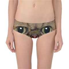 Cute Persian Cat Face In Closeup Classic Bikini Bottoms