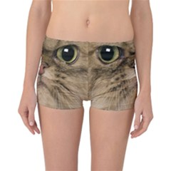 Cute Persian Cat Face In Closeup Reversible Bikini Bottoms