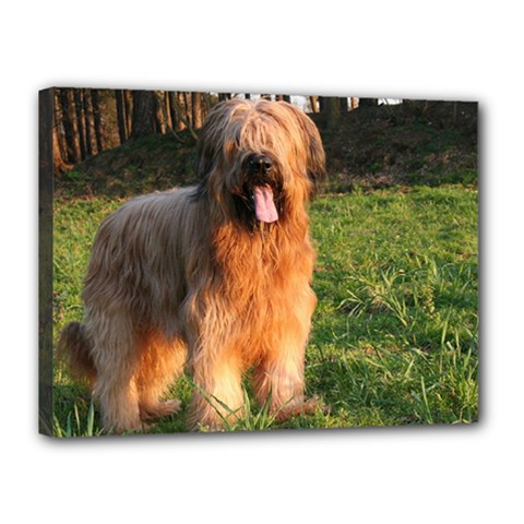 Full Briard Canvas 16  x 12