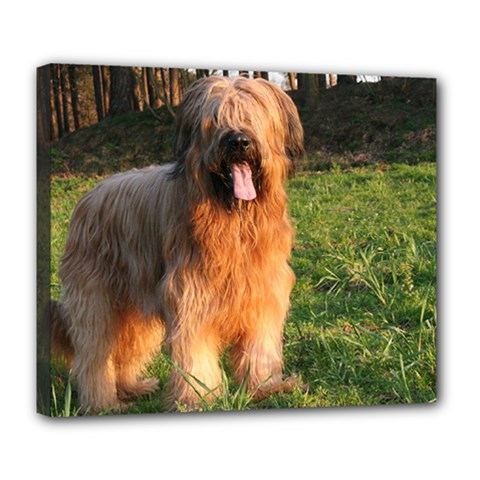 Full Briard Deluxe Canvas 24  x 20