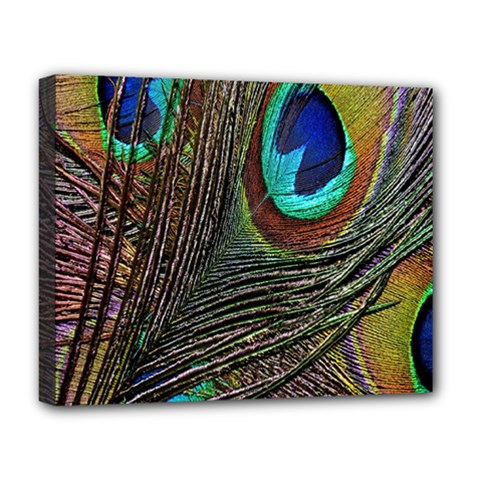 Peacock Feathers Deluxe Canvas 20  x 16