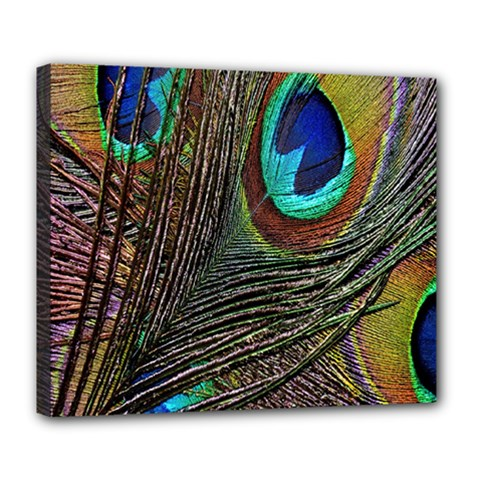 Peacock Feathers Deluxe Canvas 24  x 20