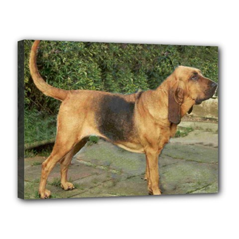 Bloodhound Black And Tan Full Canvas 16  x 12