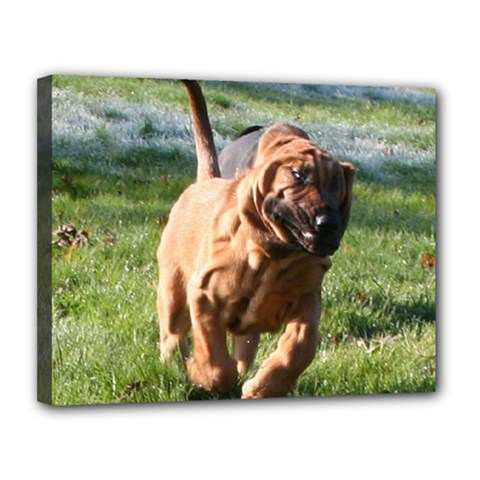 Bloodhound Running Canvas 14  x 11