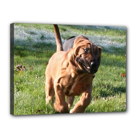 Bloodhound Running Canvas 16  x 12