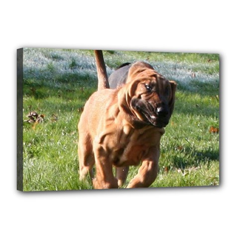 Bloodhound Running Canvas 18  x 12