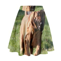 Bloodhound Running High Waist Skirt