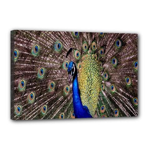 Multi Colored Peacock Canvas 18  X 12
