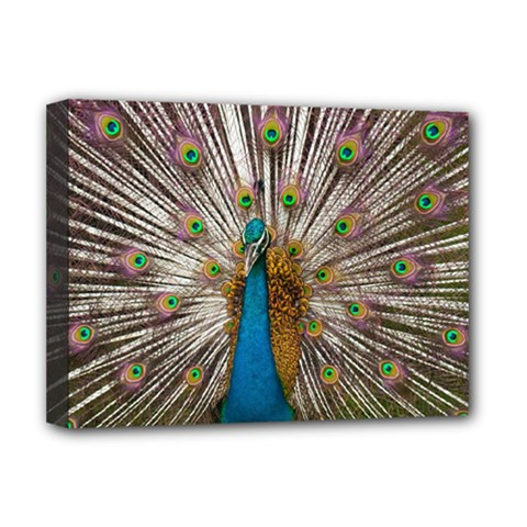 Indian Peacock Plumage Deluxe Canvas 16  X 12