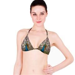 Indian Peacock Plumage Bikini Top