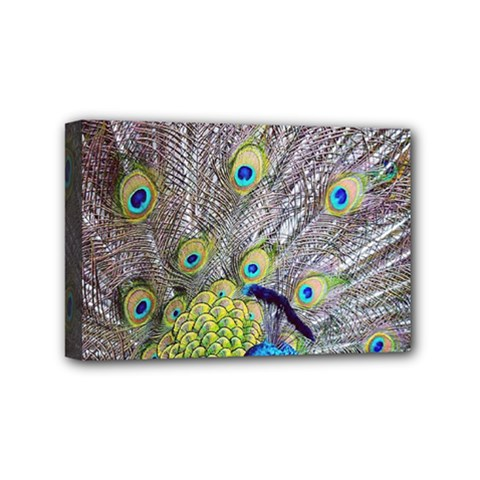 Peacock Bird Feathers Mini Canvas 6  x 4