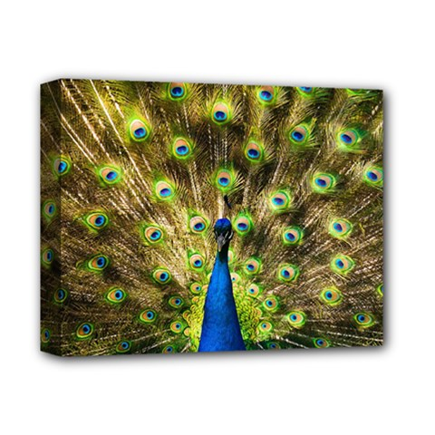 Peacock Bird Deluxe Canvas 14  X 11