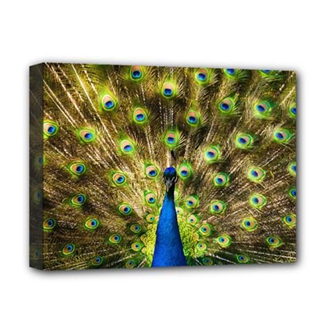 Peacock Bird Deluxe Canvas 16  x 12