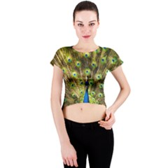 Peacock Bird Crew Neck Crop Top