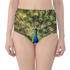 Peacock Bird High-Waist Bikini Bottoms