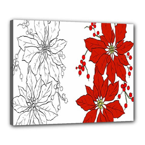 Poinsettia Flower Coloring Page Canvas 20  X 16