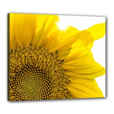 Plant Nature Leaf Flower Season Canvas 24  X 20