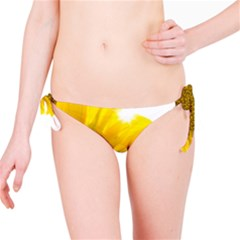 Plant Nature Leaf Flower Season Bikini Bottom