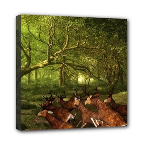 Red Deer Deer Roe Deer Antler Mini Canvas 8  x 8