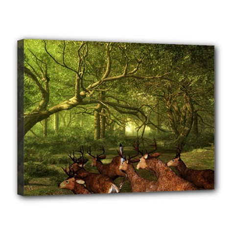 Red Deer Deer Roe Deer Antler Canvas 16  x 12